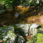 Woodland Stream — Stock Photo #53069021