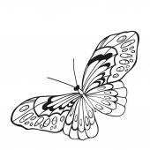 Black and white butterfly with open wings in a top vie — Stock Vector