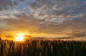 Summer sunset over a field — Stock Photo
