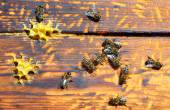 Bee hive with bees on it — Stock Photo
