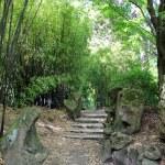 Chinese Garden — Stock Photo #52820479