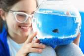 Ik wil huisdier... Vechter, beetje blauw vis — Stockfoto