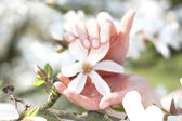 Magnolia, a beautiful spring shrub — Stock Photo