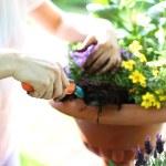 Summer work in the garden — Stock Photo #74671005