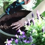 Planting flower garden — Stock Photo #74671191