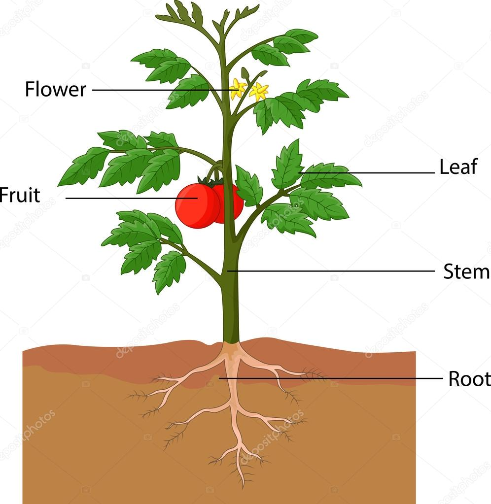 parts of plants Why are plants important part ofks2 science what is fertiliser part of ks2  science more key stage 1 science guides and clips find more primary.