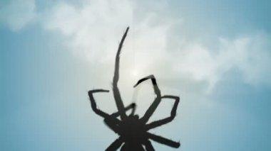 Venomous spider climbing up — Stock Video