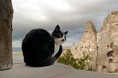 黒い猫 — ストック写真