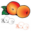 Постер, плакат: Two peaches with leaves of different styles