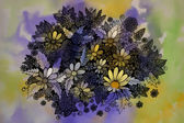 Graphic drawing of beautiful flowers — Stock Photo