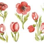 Постер, плакат: Watercolor poppies in different styles