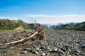 Trunk dry in the valley of Iceland — Stock Photo