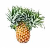 Exotic mutation pineapple — Stock Photo