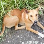������, ������: Stray dog