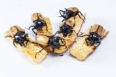 Yellow five horned beetle — Stock Photo