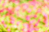Real nature blurred background — Foto de Stock