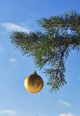 Il pallone d'oro su un ramo di albero di natale. — Foto Stock
