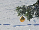 The Golden ball on a branch of the Christmas tree. — Stockfoto