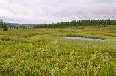 Marshy tundra near the river Lemva — Stock Photo