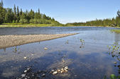 Northern taiga river on a Sunny day. — Stock Photo
