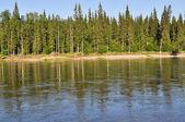 Coast Northern boreal river. — Stock Photo