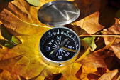 Compass in fallen leaves. — Stock Photo