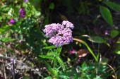 Modest Northern flower summer day.  — Stock Photo