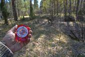 Mit Kompass im Wald. — Stockfoto