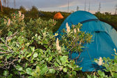 Tent in the tundra. — Stock Photo