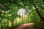 Landscapes forest color beauty nature tree green scenics woodlan — Foto de Stock
