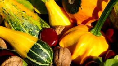 Ornamental pumpkins, walnuts and conkers as a decoration — Stock Video