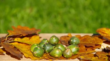 Autumn fruits of nature - walnuts — Stock Video