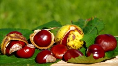 The fruits of nature in autumn, conkers — Stock Video