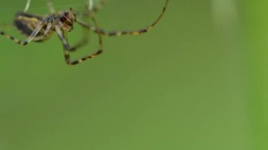 Spider on a spider web — Stock Video