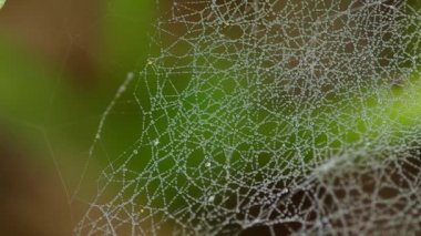 Morning dew on a spider web — Stock Video