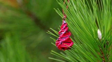 Christmas decoration on coniferous trees — Video Stock
