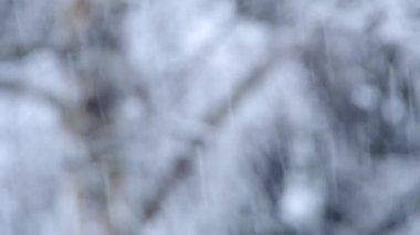 It's snowing — Stock Video