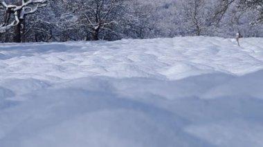 Snowy plowed field — Stock Video
