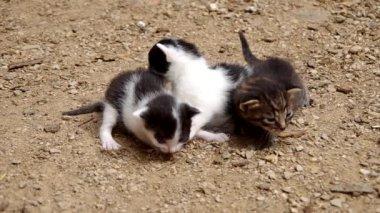Three small cats — Stock Video