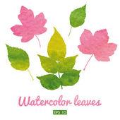 Set of beautiful watercolor leaves — Stock Vector