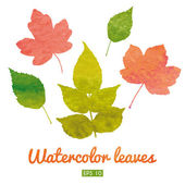 Watercolor set of autumn leaves — Stock Vector