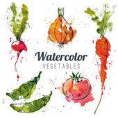 Set of watercolor vegetables — Stock Vector