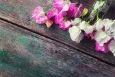 Sweet peas flowers — Stock Photo