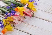Verse lentebloemen — Stockfoto