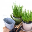 Grass in pots and garden tools isolated — Stock Photo #67971805