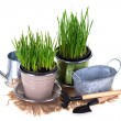 Grass in pots and garden tools isolated — Stock Photo #67982427