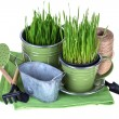 Grass in pot and garden tools isolated — Stock Photo #67982517