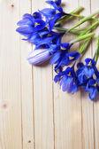 Fresh spring garden flowers — Stock Photo
