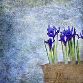 Fresh spring flowers irises — Stock Photo