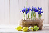Easter eggs and flowers. — Stock Photo